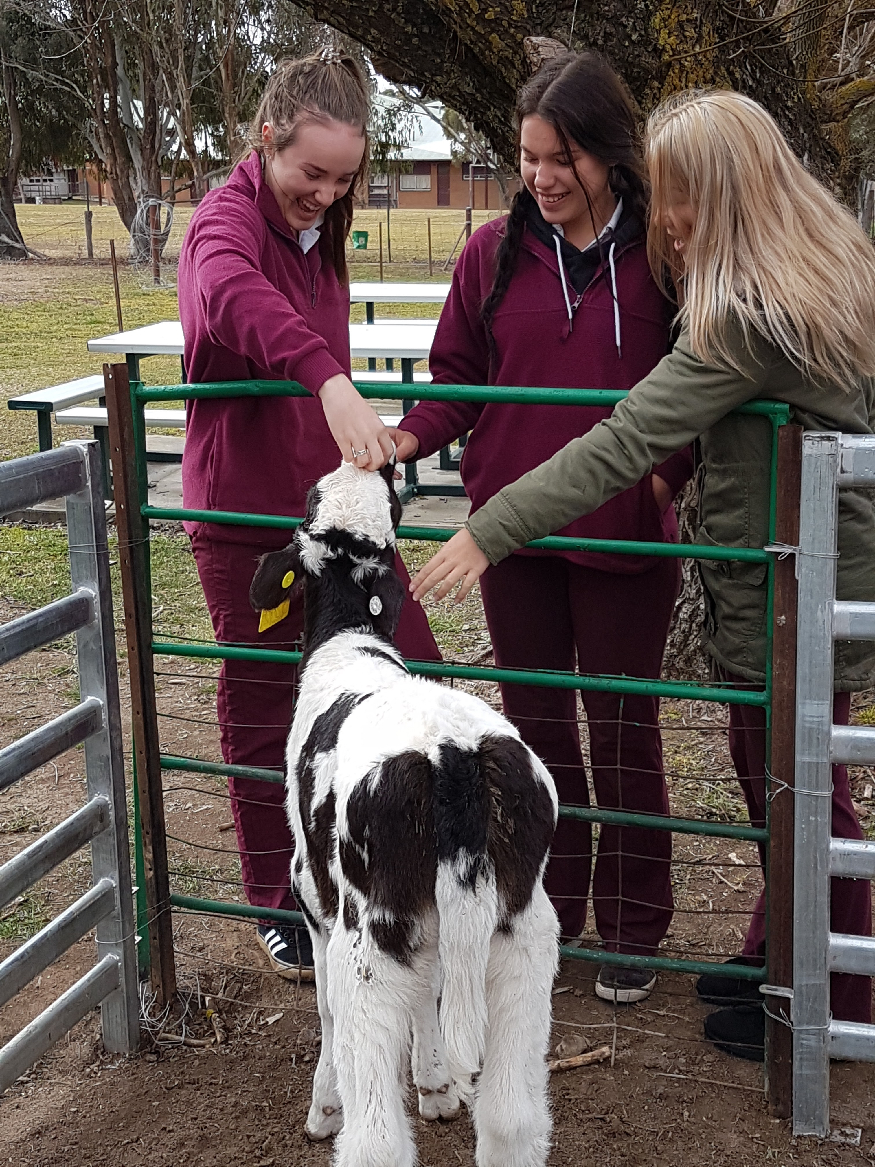 Students and calf